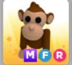 MFR Monkey Adopt ME