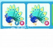 Adopt Me FR Peacock + R Peacock