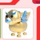 Golden Griffin Normal